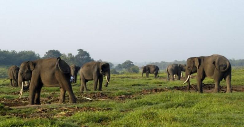 way kambas national elephant park
